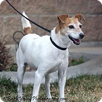 Adopt A Pet :: Jeff - Gunnison, CO
