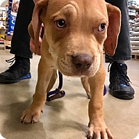 Adopt A Pet :: Tackles - Gainesville, FL