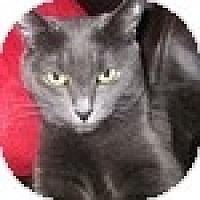 Adopt A Pet :: Raisin AKA Dusk - Vancouver, BC