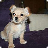 Adopt A Pet :: Shelby - Westfield, IN