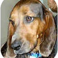 Adopt A Pet :: Minny - Phoenix, AZ