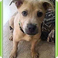 Adopt A Pet :: Barnabee - Gilbert, AZ