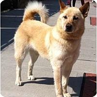 Adopt A Pet :: Summer - West New York, NJ