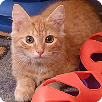 Adopt A Pet :: Cricket - Bedford, MA