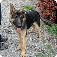 Adopt A Pet :: Apollo - Sunnyvale, CA