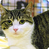 Adopt A Pet :: Pinky - Pittstown, NJ