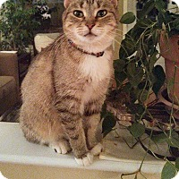 Adopt A Pet :: Violet - THORNHILL, ON