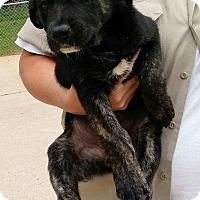 Adopt A Pet :: Ariel - Patterson, NY