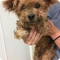Adopt A Pet :: Hank Williams - Newport, KY