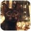 Photo 2 - Domestic Shorthair Kitten for adoption in Brooklyn, New York - Mimi