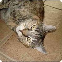 Adopt A Pet :: Crash - Mesa, AZ