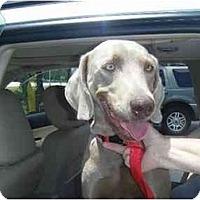 Adopt A Pet :: Gia  **ADOPTED** - Eustis, FL