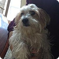 Adopt A Pet :: Tony - Garwood, NJ