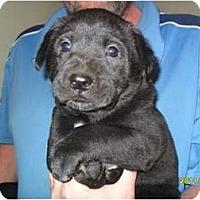 Adopt A Pet :: Sela - Courtesy post - Glastonbury, CT