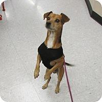 Adopt A Pet :: Redford - Gilbert, AZ