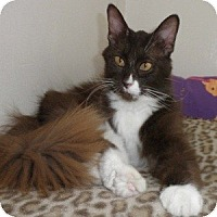 Adopt A Pet :: Emerson - Phoenix, AZ