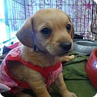 Adopt A Pet :: Madge - Oceanside, CA