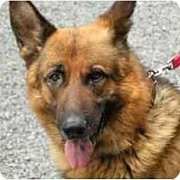 Adopt A Pet :: Zento - Rigaud, QC