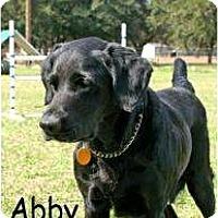 Adopt A Pet :: Abby - Altmonte Springs, FL