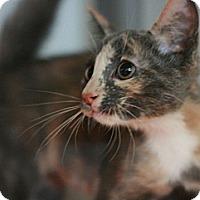 Adopt A Pet :: Fancy - Canoga Park, CA