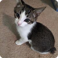 Adopt A Pet :: Brice - Monroe, GA
