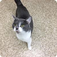 Adopt A Pet :: Pinkman - Medina, OH