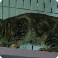 Adopt A Pet :: Bells - Whittier, CA