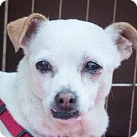 Adopt A Pet :: Sweetie - San Marcos, CA