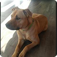 Adopt A Pet :: Maxwell - Idaho - Fulton, MO