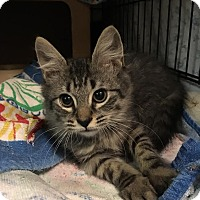 Adopt A Pet :: Newman/Sushi - East Brunswick, NJ