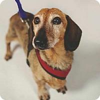 Adopt A Pet :: Ethan - Jacksonville, FL