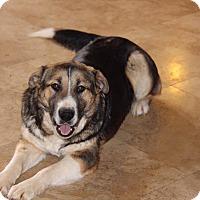 Adopt A Pet :: Sol - Phoenix, AZ