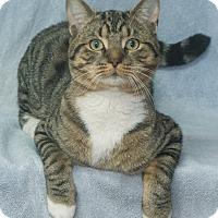 Adopt A Pet :: Stewart - Elmwood Park, NJ