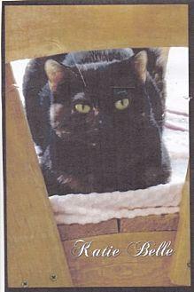 Domestic Shorthair Cat for adoption in Calimesa, California - Katie Belle