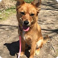 Adopt A Pet :: Mona - Livonia, MI