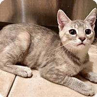 Adopt A Pet :: Charade - Long Beach, CA