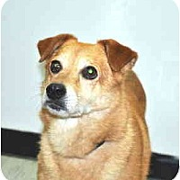 Adopt A Pet :: Roxanne - Port Washington, NY