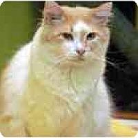 Adopt A Pet :: Brendan - Marietta, GA