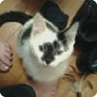 Adopt A Pet :: SCOTTY&CALLIE - Clay, NY