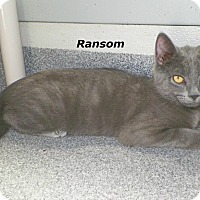 Adopt A Pet :: Ransom - Dover, OH