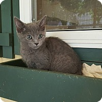 Adopt A Pet :: Soanky - Anderson, IN