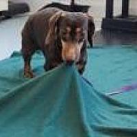 Adopt A Pet :: LL Bean - Mount Gretna, PA