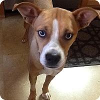 Adopt A Pet :: Tiffany - Manhasset, NY
