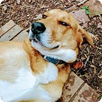 Adopt A Pet :: Cooper - Allentown, NJ