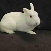 Adopt A Pet :: A1674886 - Los Angeles, CA