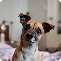 Adopt A Pet :: Slinky - VIDEO! - Los Angeles, CA