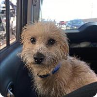 Adopt A Pet :: Tucker - Encino, CA
