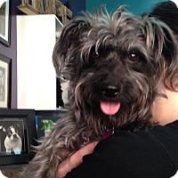 Adopt A Pet :: Luna - Thousand Oaks, CA