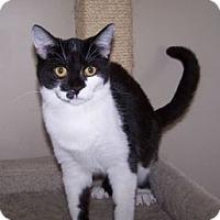Adopt A Pet :: K-Blevin1-Dot - Colorado Springs, CO