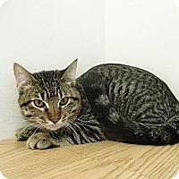 Adopt A Pet :: Chuck - Milwaukee, WI